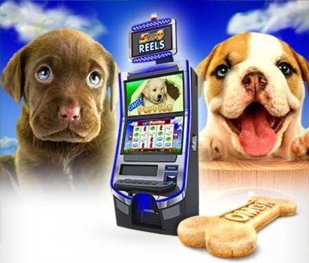 260 gratis kasinospins på Qeen Bee Bingo
