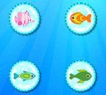 Color Fish Quest