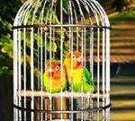 انقاذ الطيور الحب
