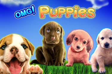 Omq puppies