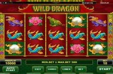 Image result for Wild Dragon