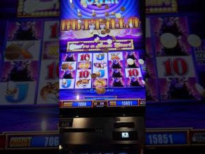 Buffalo Big Win Holland casino Utrecht