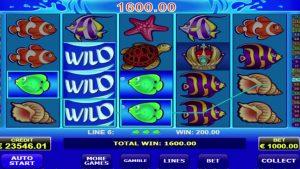 Wild shark supergevinst - 183,000. Det er utrolig!