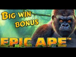 Epic Ape large win bonus 265x. Playtech online slot
