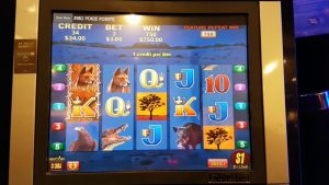 CROWN casino bonus Melbourne – Pokies – large ruddy 2 – 25 September 2016 – large Win $750 Tree