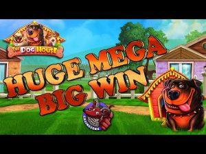 Huge Mega large Win  –  domestic dog House