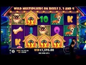 casino bonus tape large wins 22k    The Canis familiaris House
