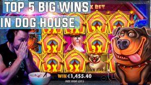 Domácí pes House top 5 velkých WINS - páska zvítězí na slotu