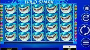 WILD SHARK kasinový bonus SLOTY / FORZZA kasinový bonus TUNISIE velký VÝHRA