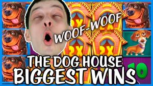 THE Canis familiaris HOUSE SLOT BIGGEST WINS