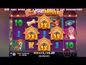 large WIN. domestic dog HAUSE. casino bonus ONLINE. 93000€.