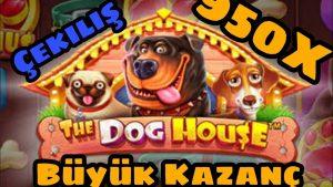 domestic dog House 950X Efsane Koyduk 11.000 TL (ÇEKİLİŞ) #slot #bigwin #casino bonus
