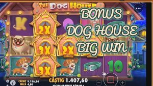 Canis familiaris HOUSE BONUS large WIN