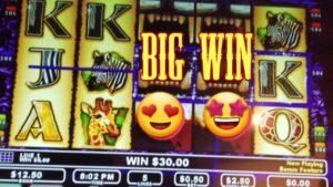 The Wild Life {BONUS} Max Bet large Win!