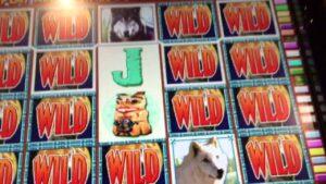 Wolf Run Slot GOING WILD $$$ – really large Win @ Bellagio casino bonus Las Vegas