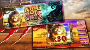 Rex OF CATS MEGAWAYS (large TIME GAMING) 😺 large WIN