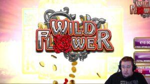 Wild bloom HUGE WIN ★ Vihjeareena Twitch flow