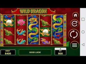 large win casino bonus Wild dragon amatic game 🔥🔥