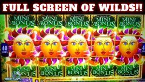 🚨 total covert OF WILDS!!!! 🚨 Huge win!!!   Solstice Celebration Triple Sparkle Slot