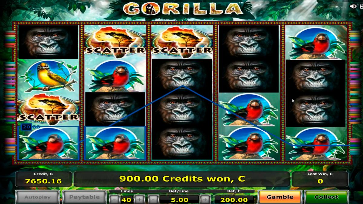 Большой слот для казино Gorilla € 22.000 с бонусной игрой, 3 разбрасывает